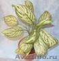 Комнатные растения для вас и ваших друзей