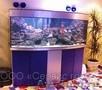 Эксклюзивные аквариумы для дома,  офисов,  ресторанов и кафе.