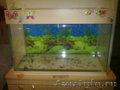продам аквариум!!!!!!!